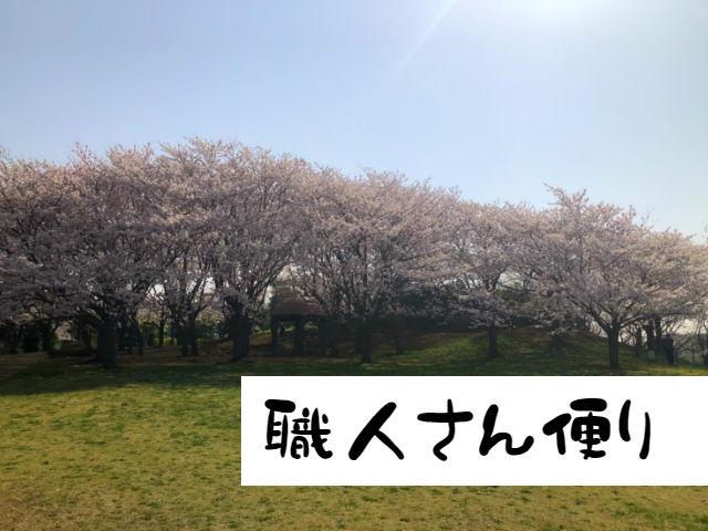 白井市の桜