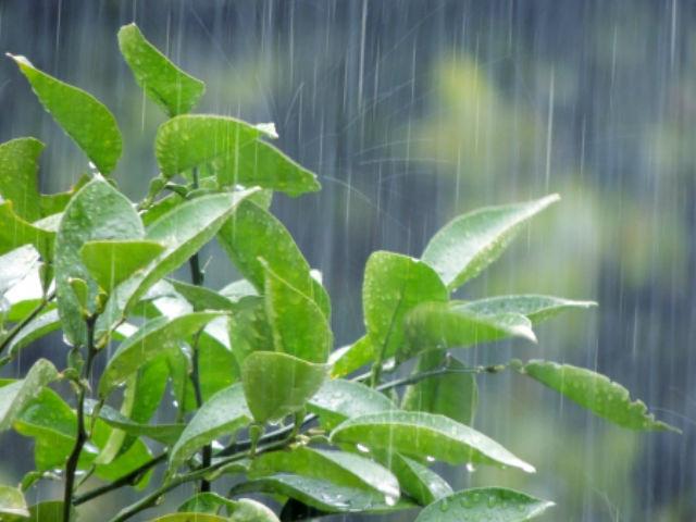 外壁塗装工事中の雨の影響は?