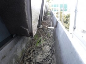 千葉県習志野市 雨樋つまり清掃