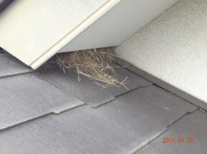 印西市K様 鳥の巣の除去と軒天の隙間埋め工事